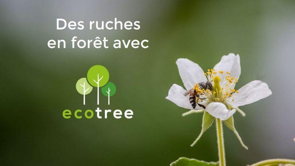 Visuel Ecotree